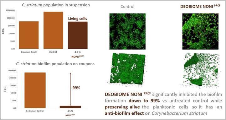 Rys. 3 Analiza tworzenia biofilmu na Corynebacterium striatum