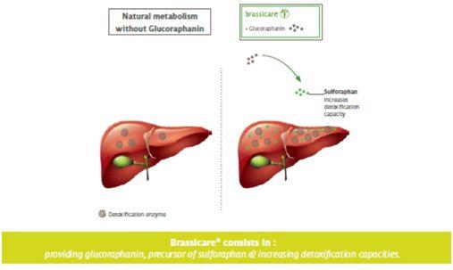 wątroba - wpływ detoksykacji